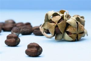 Huile de jojoba biologique : ses propriétés
